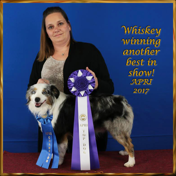 STA Heza Whiskey Asset - best in Show at Mena Arkansas with APRI