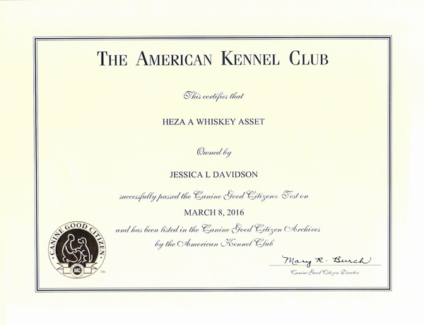 Whiskey's Canine Good Citizen title from the American Kennel Club
