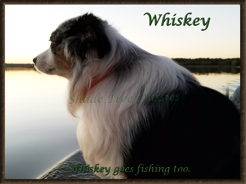 Whiskey loves being with his people so even goes fishing.